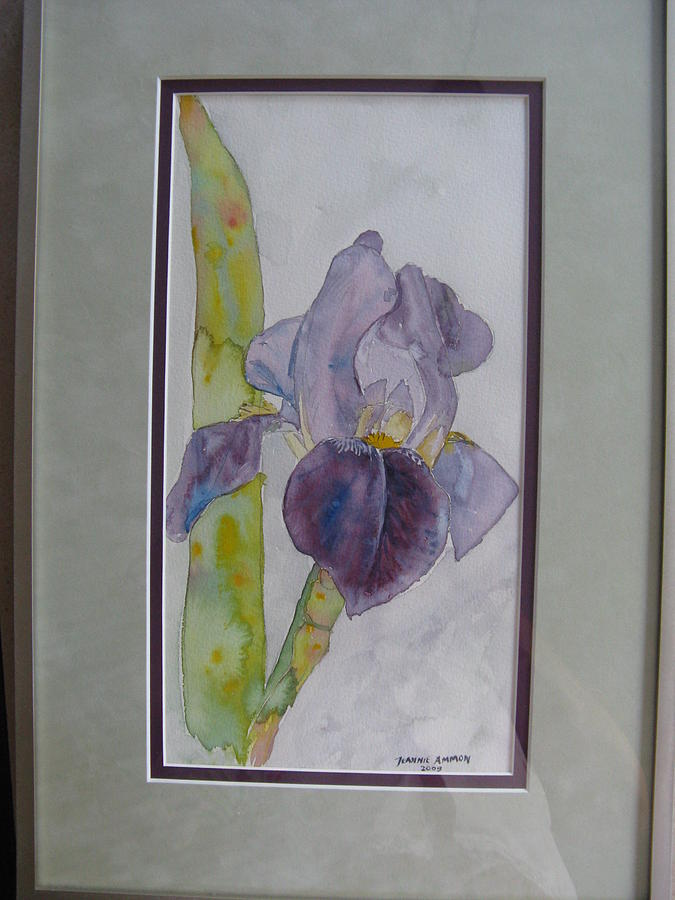 Iris Painting by Jeannie Ammon