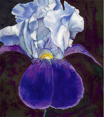 Flower Greeting Card - Iris by Judy Lewis