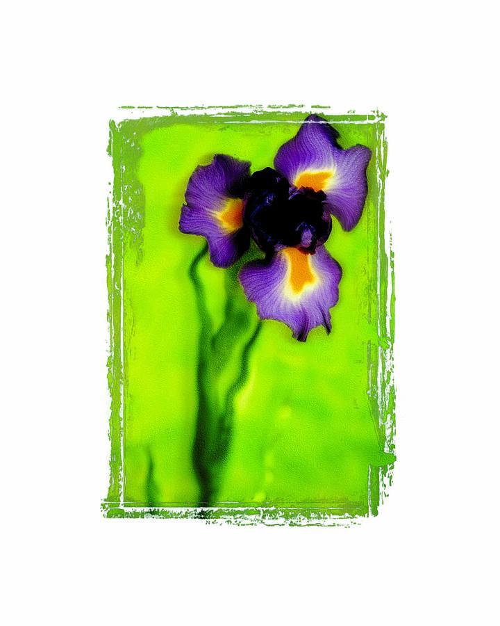 Iris Photograph - Iris by K Randall Wilcox