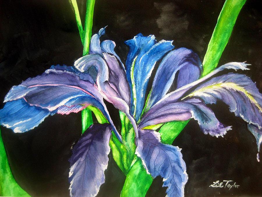Iris Painting - Iris by Lil Taylor