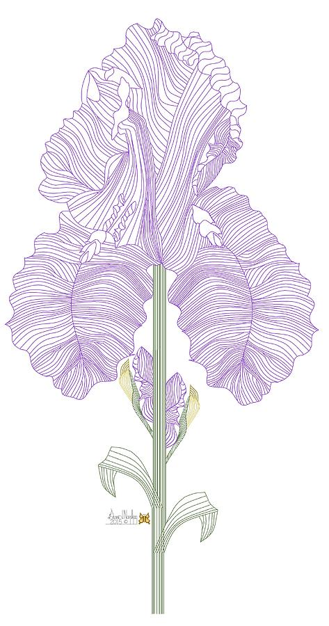 Botanical Painting - Iris Line Drawing Two by Anne Norskog