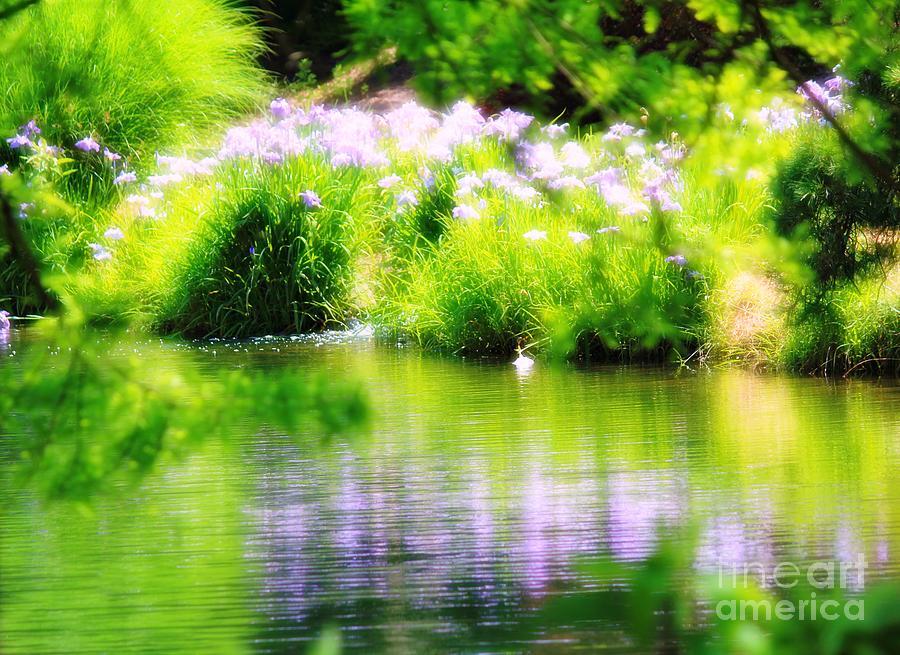 Iris Photograph - Iris Reflection by Karin Everhart