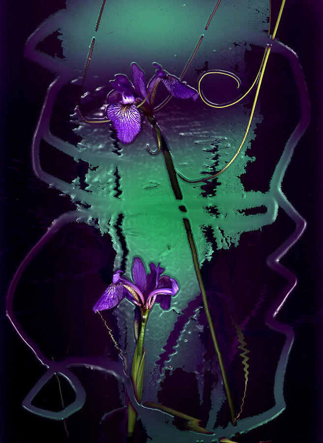 Iris Reflections Photograph by Algis Kemezys