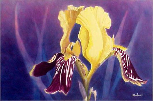Iris Painting - Iris by Scott Gordon