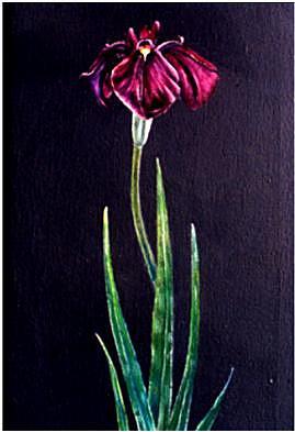 Flower Painting - Iris Study by Richard Bulman