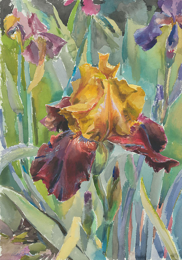 Watercolor Painting - Iris Sultan by Alan Singer