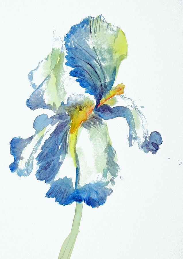 Flower Painting - Iris by Tina Storey