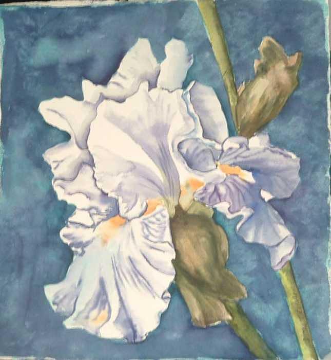 Watercolor Painting - Iris twenty one by Diane Ziemski