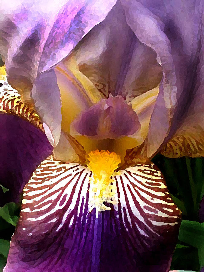 Flowers Photograph - Iris  by Valerie  Moore