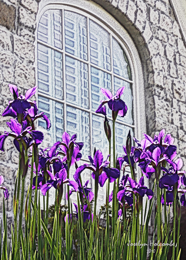 Iris with Window by Joselyn Holcombe