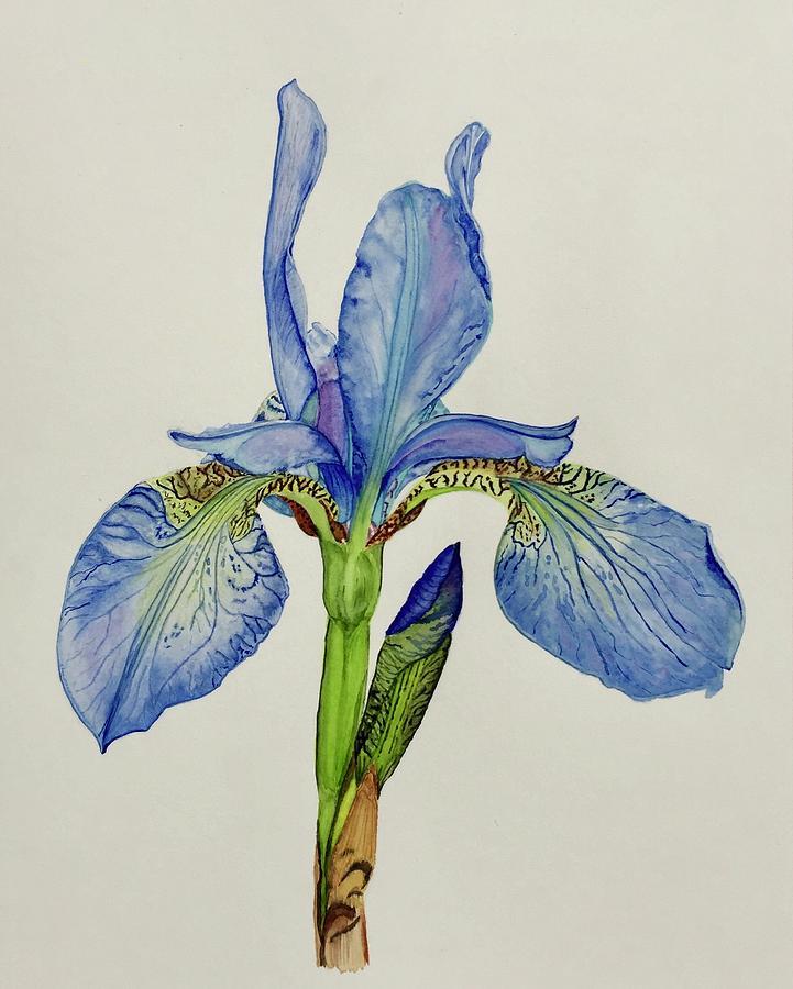Iris You Were Here by Sonja Jones