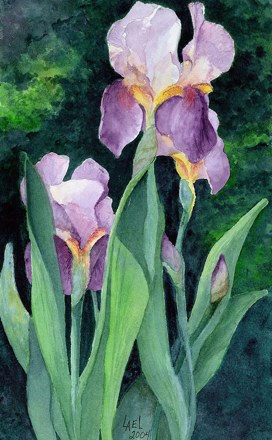 Irises #2 by Lael Rutherford
