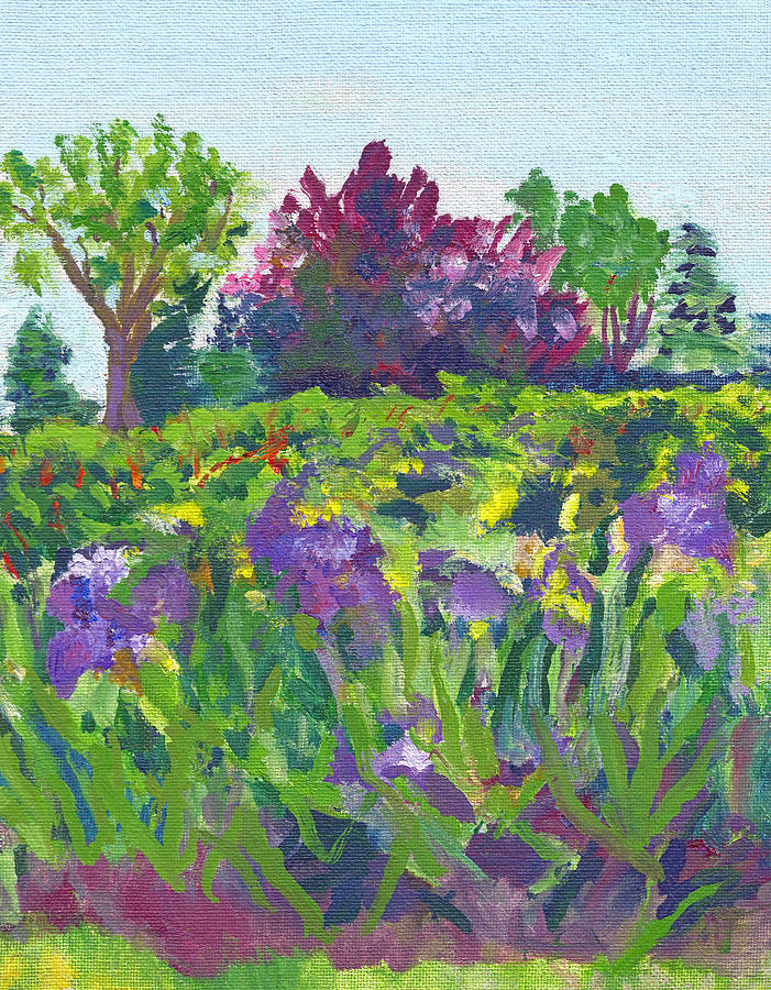 Irises At The Rose Garden Painting By Paul Thompson