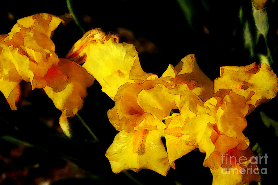 Iris Digital Art - Irises by David Blank