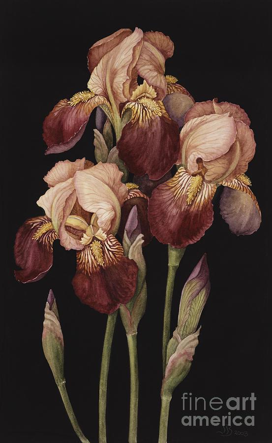 Flower Painting - Irises by Jenny Barron