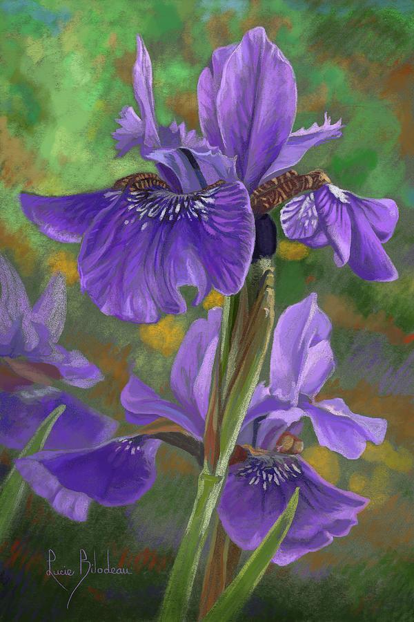 Flowers Pastel - Irises by Lucie Bilodeau