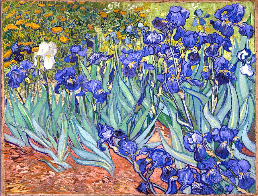 Van Gogh Painting - Irises by Van Gogh