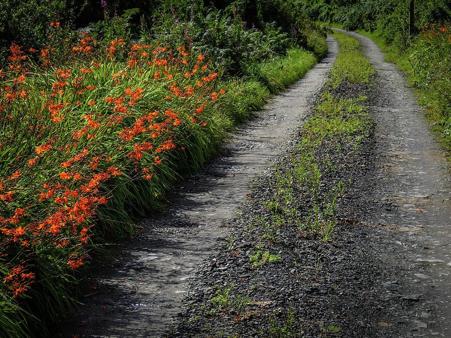 Ireland Photograph - Irish Country Road Lined With Wildflowers by James Truett