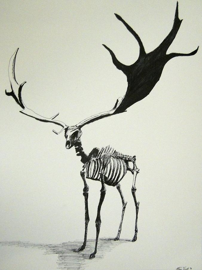 Irish Elk Skeleton Drawing by Steven Frost
