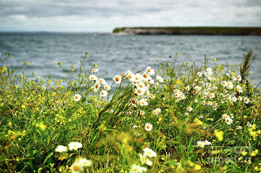 Irish Flower Impression Photograph