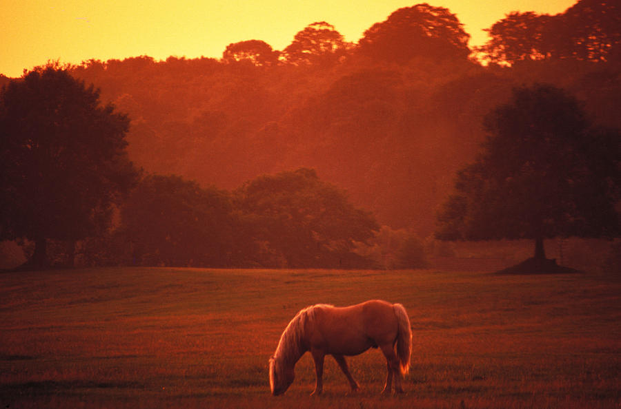 Twilight Photograph - Irish Horse In Gloaming by Carl Purcell