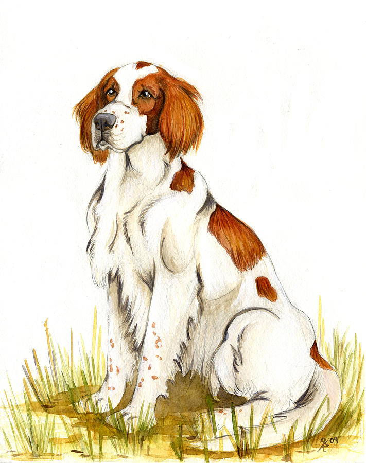 Dog Portraits Painting - Irish Red And White Setter by Katy Ryan