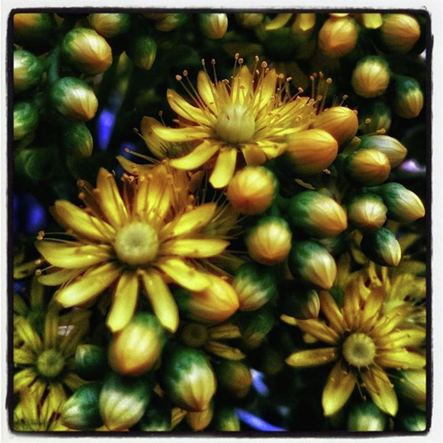 Photogram Photograph - Irish Rose. Also Known As Pinwheel by Mr Photojimsf