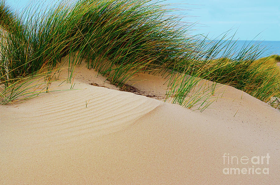Irish Sea Sand Dunes by Spade Photo