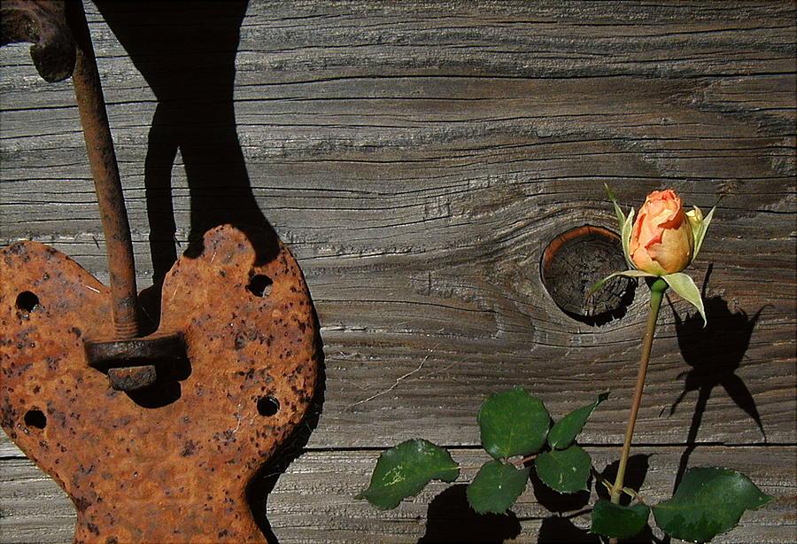 Charred Wood Photograph - Iron Flower by Mark Stevenson