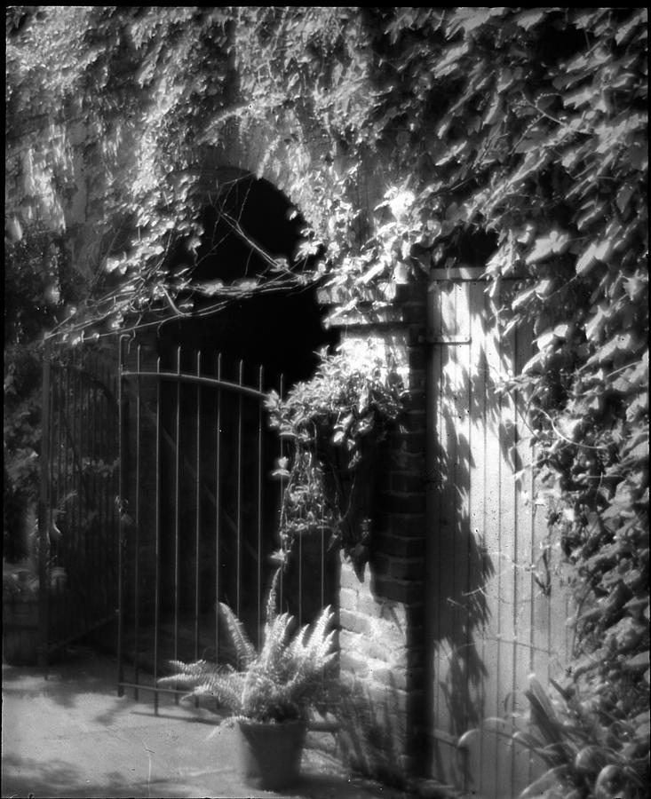 Vines Photograph - Iron Gate And Wooden Door by Crescent City Collective