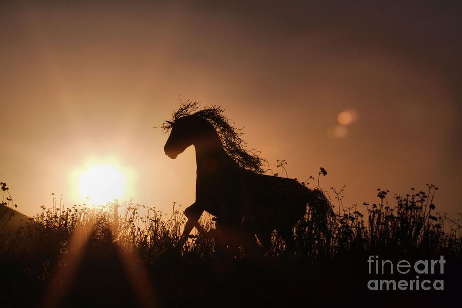 Iron Horse Photograph - Ironhorse by Caroline  Jeanine