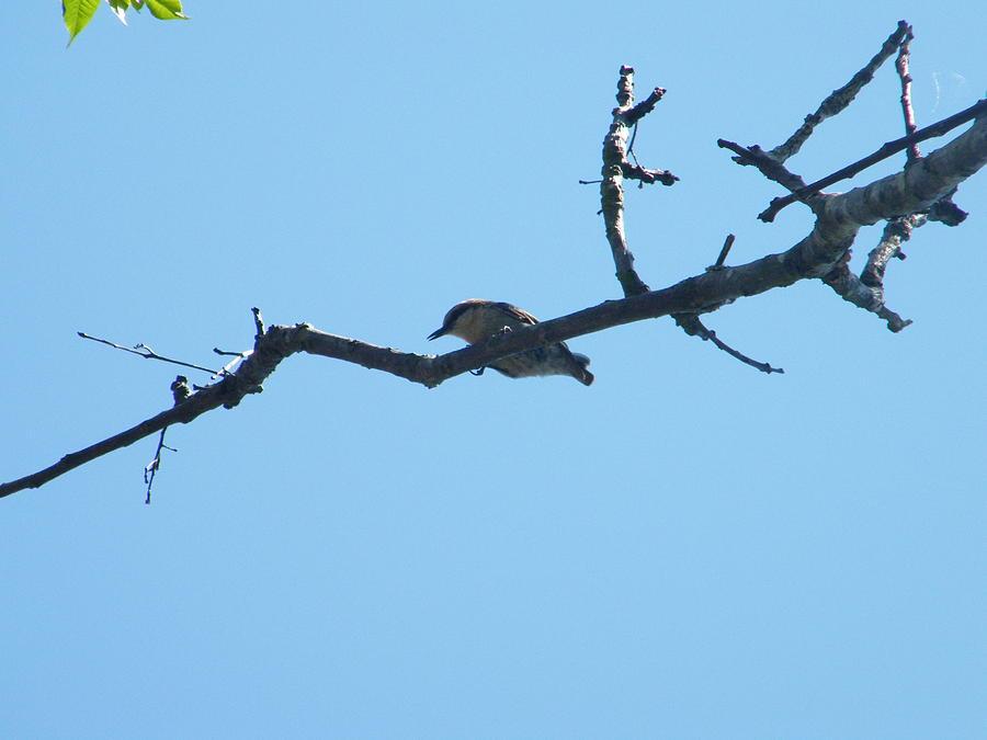 Is A Bird Photograph by Nereida Slesarchik Cedeno Wilcoxon