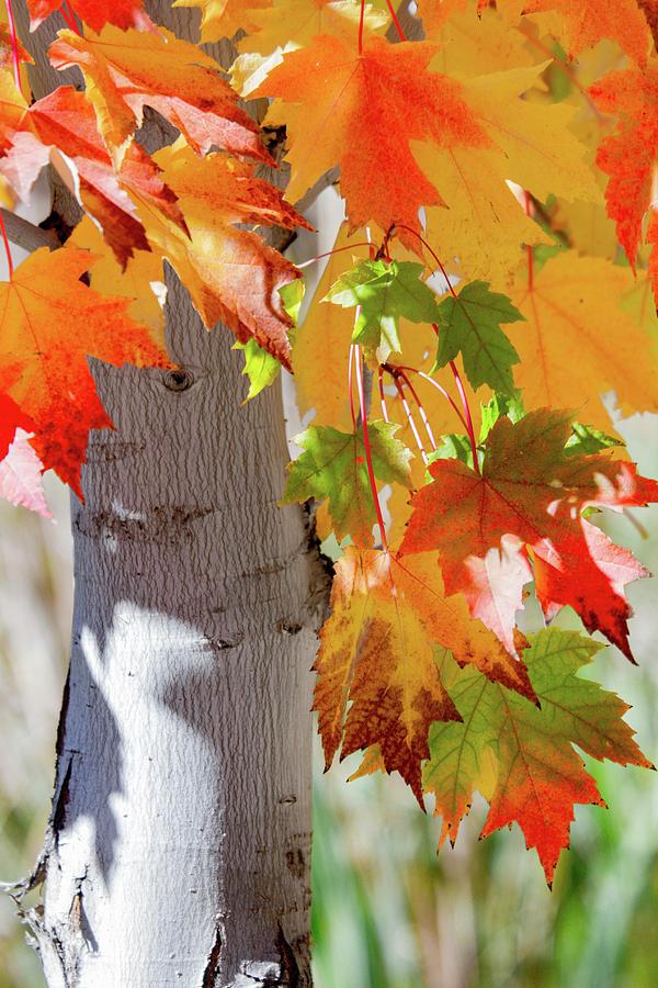 is it autumn yet photograph by robynn balduf rh fineartamerica com
