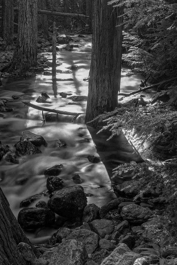 Is it Snow or Water on Johnson Creek by Roderick Bley