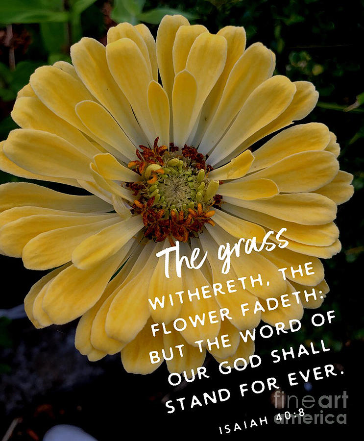 Yellow Flower Photograph - Isaiah 40.8 by SGLY Ministry