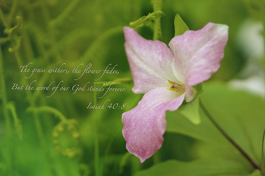 Spring Photograph - Isaiah Verse by Louis Rivera