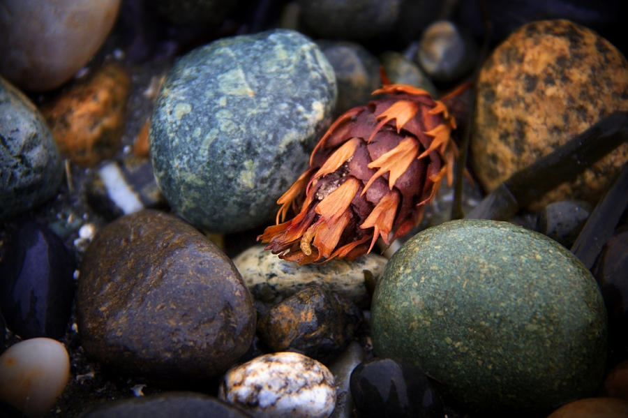 Stones Photograph - Isakro One by Julius Reque