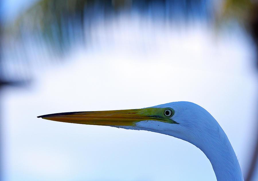 Egret Photograph - Islamorada Egret by Ty Helbach