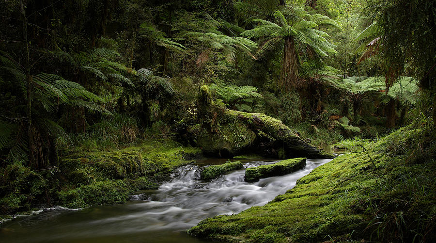 Tree Ferns Photograph - Islands Of Green 2 by Peter Prue