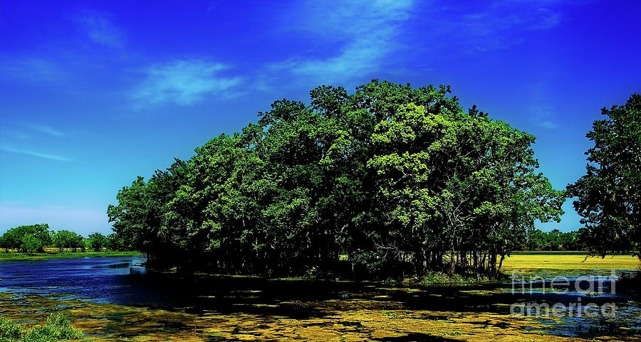 Isle Of Trees by JB Thomas