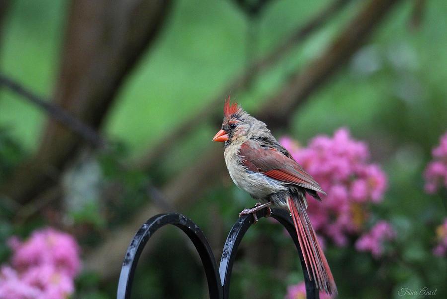 Birds Photograph - Isnt She Lovely by Trina Ansel