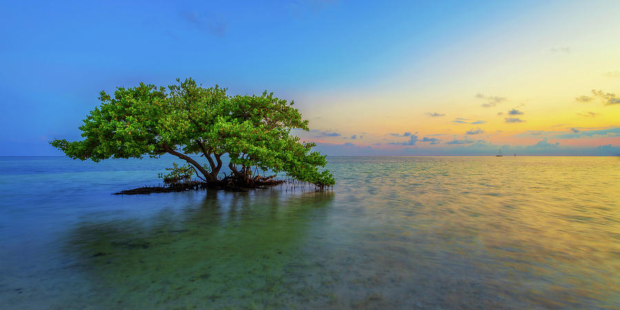 Mangrove Photograph - Isolation by Chad Dutson