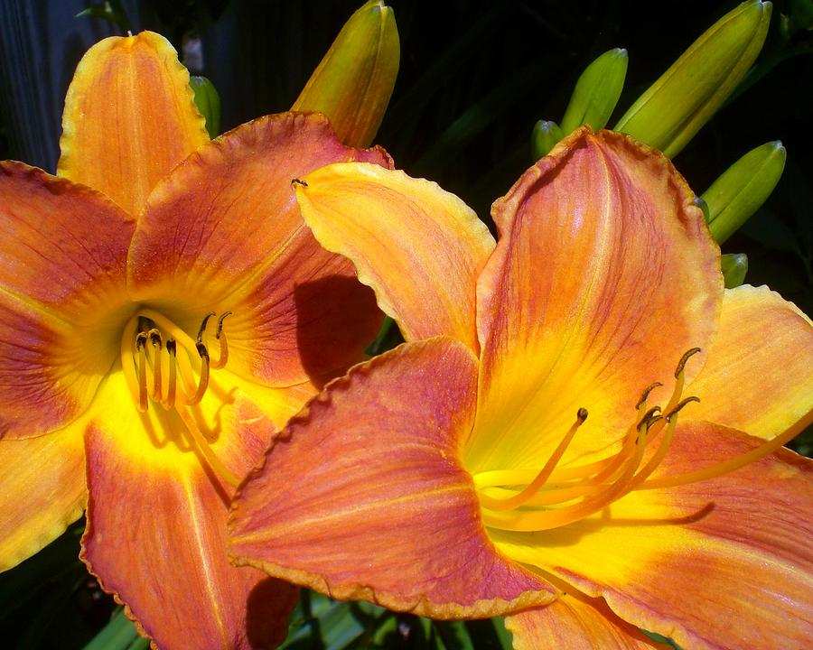 Nature Photograph - It Is So True Lily by Cynthia Daniel