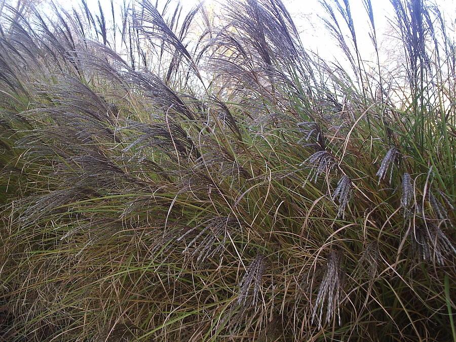 It Is Windy Photograph by Moni Joan