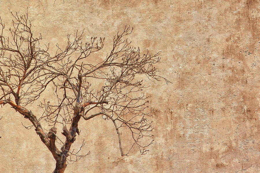 Italian Bare Tree In Winter by Stulaine Studios
