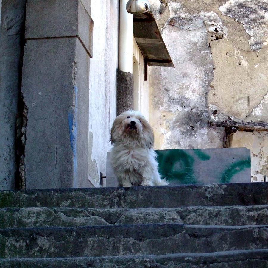 Capri Photograph - Italys Capri Doggie by Mindy Newman