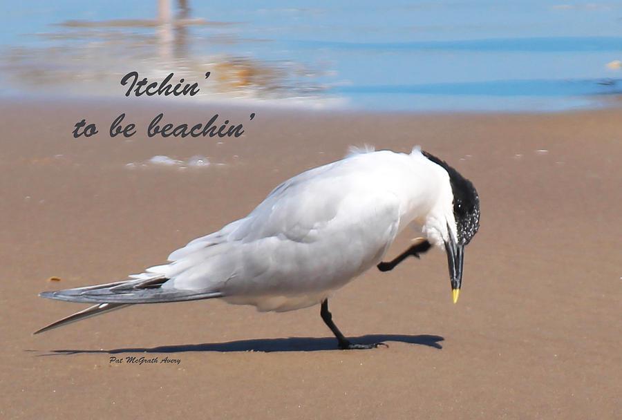 Beach Photograph - Itchin to be beachin by Pat McGrath Avery