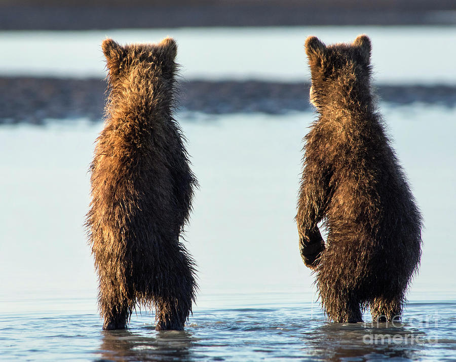 Grizzly Bear Photograph - Its A Big World Out There by Claudia Kuhn