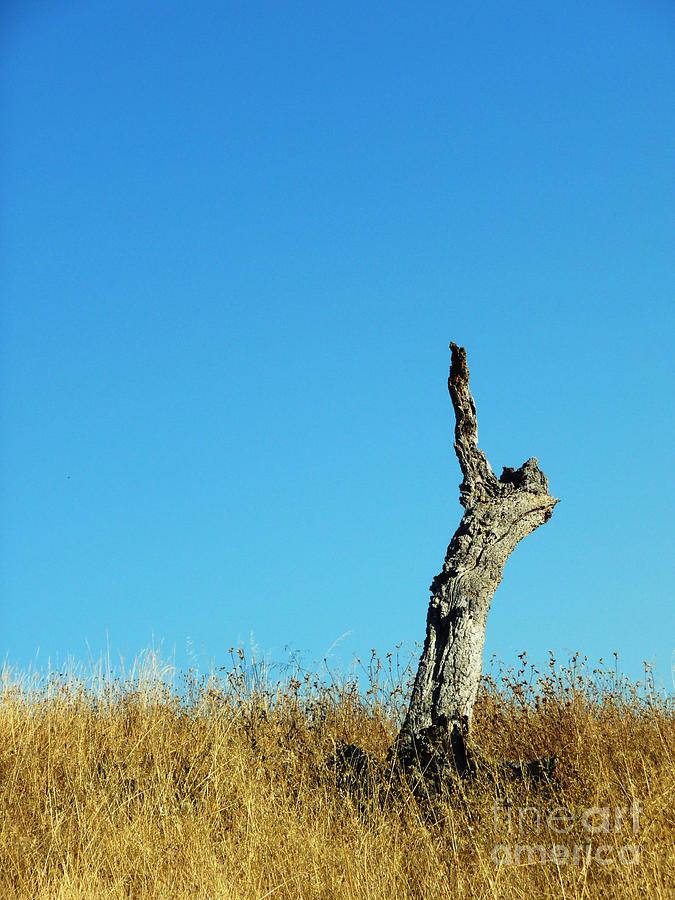 Sky Photograph - Its A Crack Up by JoAnn SkyWatcher