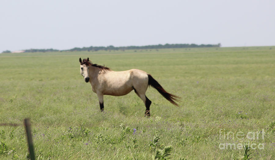 Wild Horses Photograph - Its A Horse Of  Course by Mike Parker